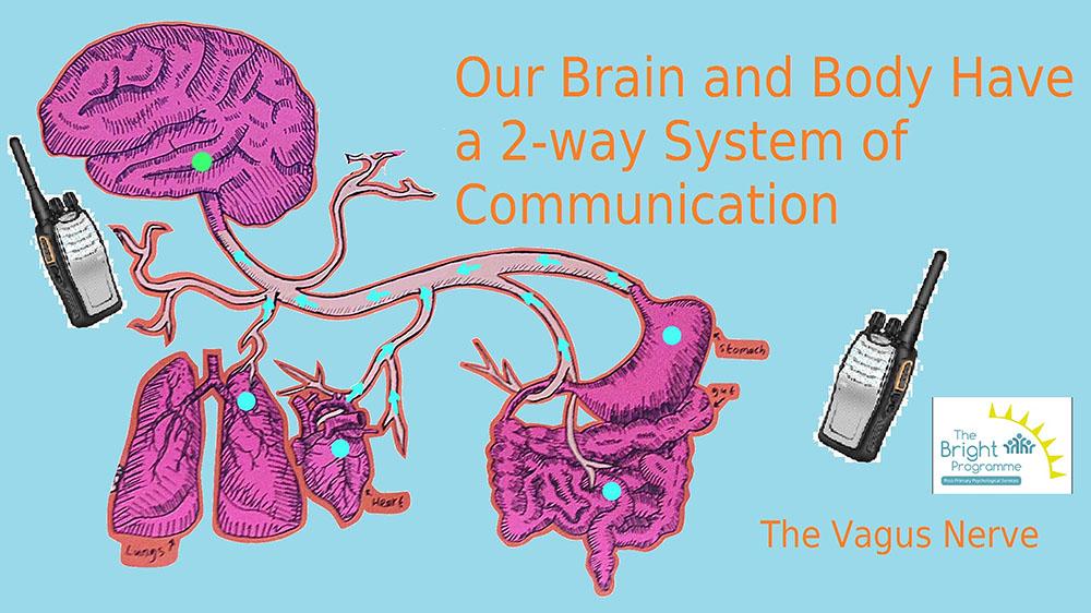 reptile brain- vagus nerve_1